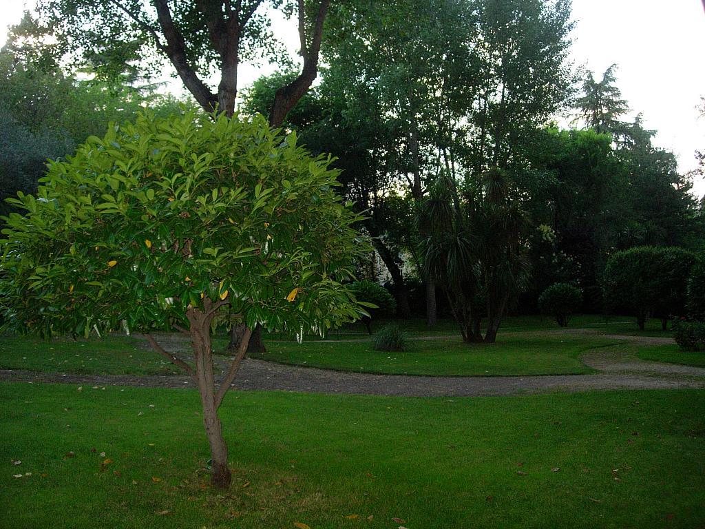 Piso en alquiler en calle Sandalo, Piovera-Conde Orgaz en Madrid - 322511136