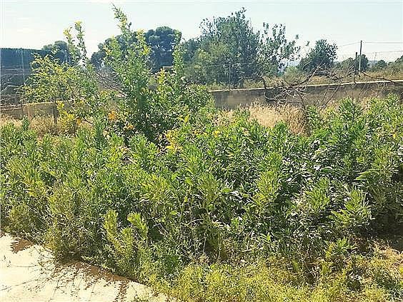 Chalet en alquiler en urbanización Camp de Lliria, Llíria - 273198713