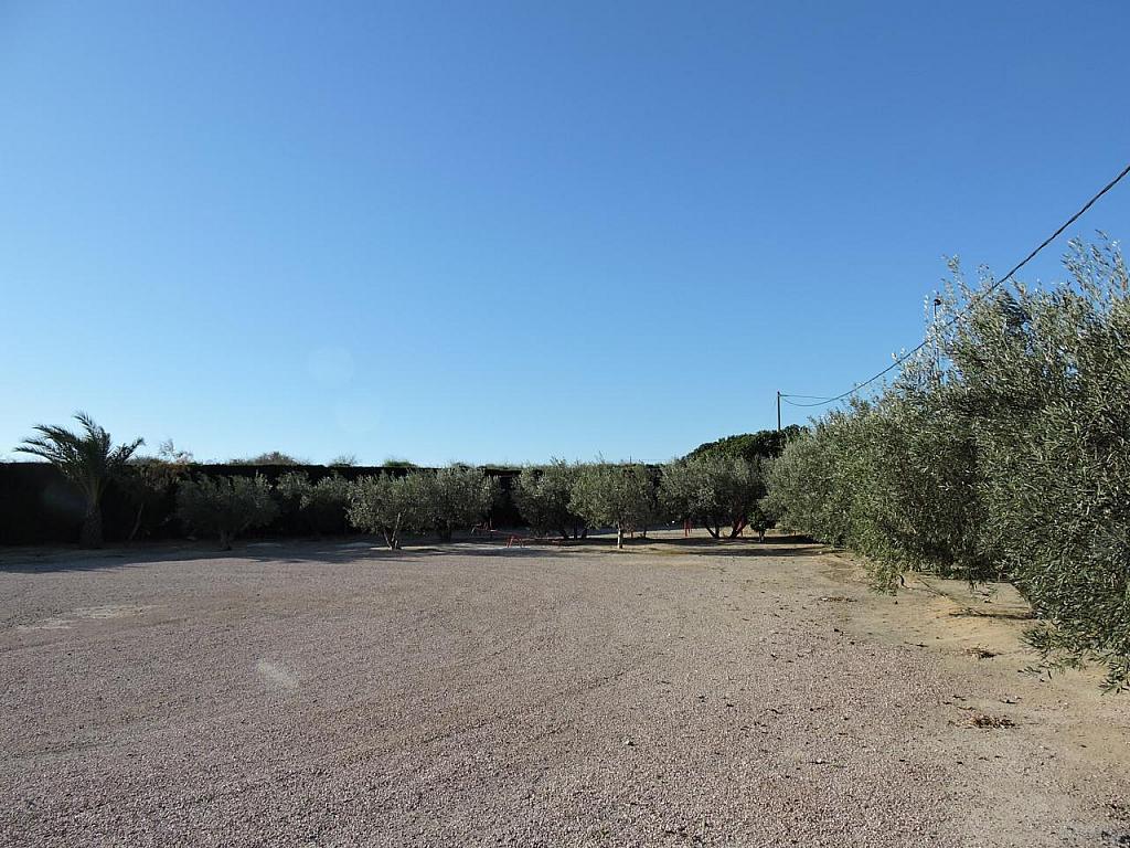 Local - Local comercial en alquiler en calle Camino Saborida, Disperso Partidas en Alicante/Alacant - 295085485