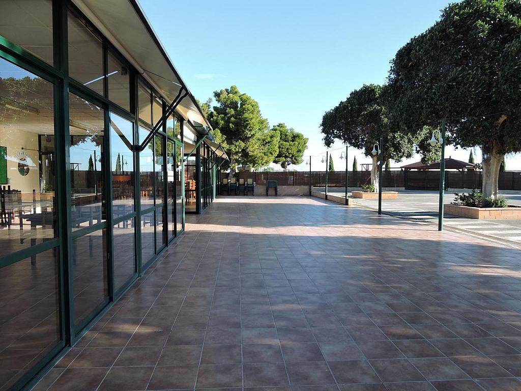 Local - Local comercial en alquiler en calle Camino Saborida, Disperso Partidas en Alicante/Alacant - 295085488