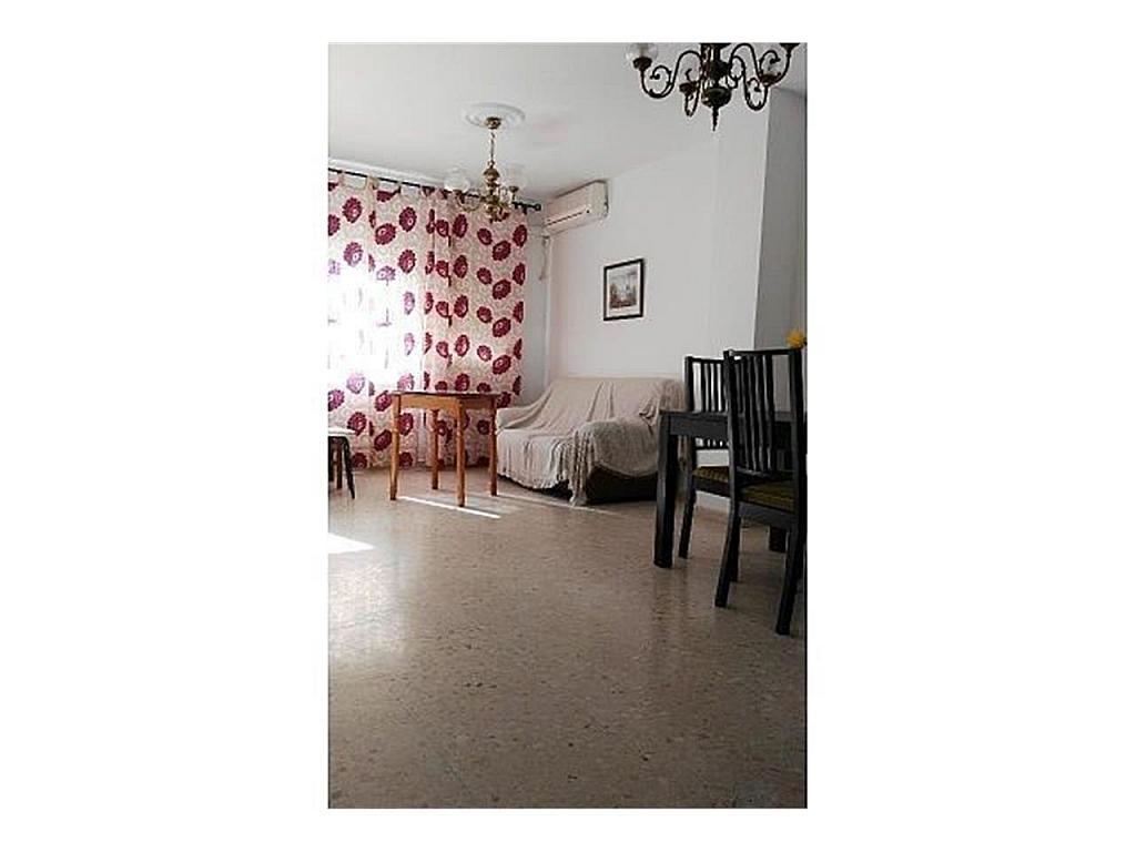 Piso en alquiler en Sanlúcar la Mayor - 384903635