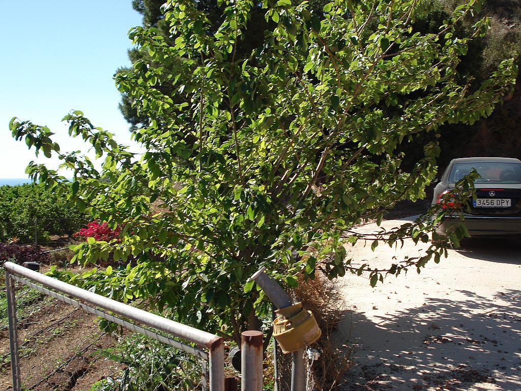 Jardín - Casa rural en alquiler en calle , Sagunto/Sagunt - 138876962