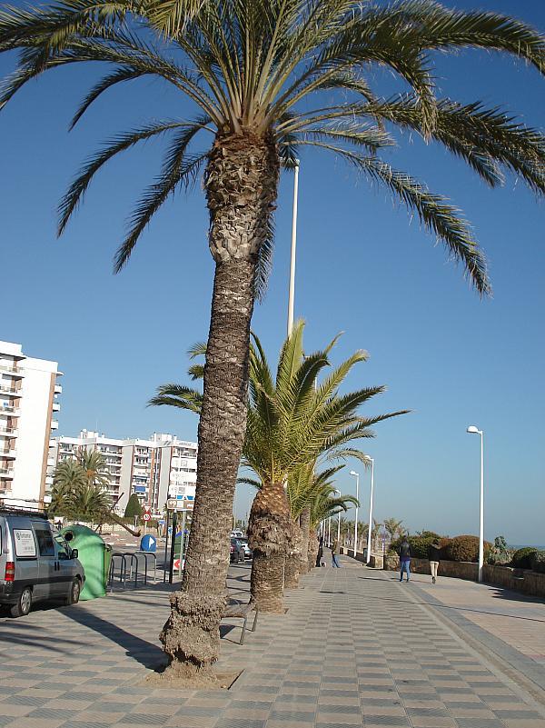 Piso en alquiler en calle , Puerto de Sagunto - 225125633