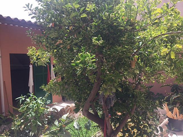 Piso en alquiler en calle Jaume I, Porreres - 299699780