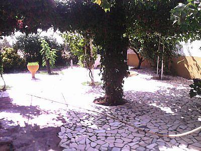 Jardín - Casa rural en alquiler de temporada en carretera Finca, Navalcarnero - 221041571