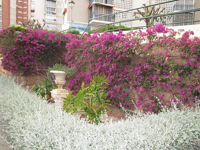 Foto - Apartamento en venta en calle Nicaragua, Poniente en Benidorm - 326095788