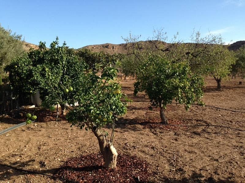 Foto - Chalet en alquiler en San Vicente del Raspeig/Sant Vicent del Raspeig - 312034072