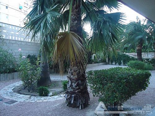 Apartamento en la playa - Piso en alquiler opción compra en Alicante/Alacant - 325625180