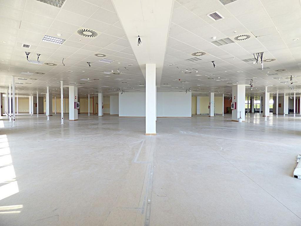 Otros - Oficina en alquiler en calle Avinguda de Jean Claude Combaldieu, San Gabriel en Alicante/Alacant - 301696449