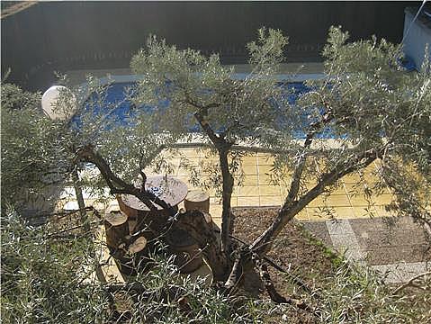 Casa en alquiler en calle Camino de Faustino, Murcia - 160475315