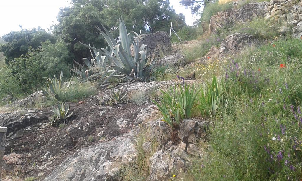 Jardín - Casa rural en alquiler en calle Río, Robledo de Chavela - 300957519